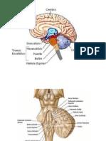 Sindromes Alternos Tc