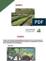 2.- Producción de Plantas-II