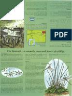 Gearagh Alluvial Forest - Infosheet