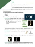 Anatomía Tema 2