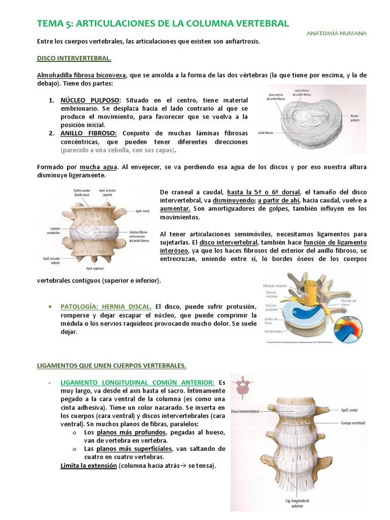 Anatomía Tema 5