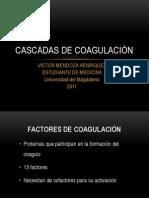 Cascada de Coagulacion
