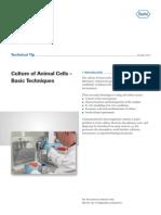 Culture of Animal Cells-Basic Techniques TT