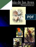 Anatomía de Aves
