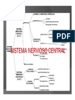 SISTEMA NERVIOSO CENTRAL  PRACTICA movie.pdf