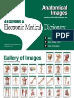 Anatomy Atlas