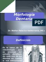 Morfologia Definicion, Anatomia Dentaria, Diente y Funciones