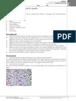 zanoli_lab_c09_mitosi_negli_apici_radicali_di_cipolla.pdf