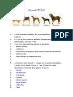 Perros.docx