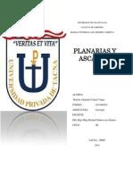 Informe de Planarias y Ascarias