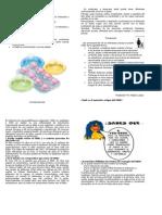 El Embarazo Precoz diptico 2003.doc