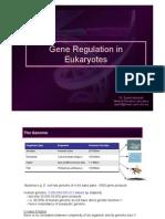 GE05-Gene+Regulation+in+Eukaryotes(1)