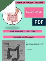 anatomi kolon-rektum