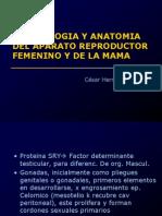 1 Embriologia y Anatomia Del Aparato Genital Femenino y de La Mama