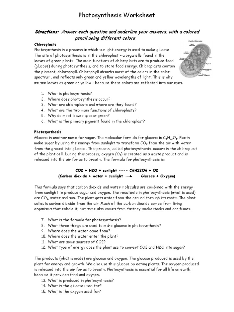 Photo Synthesis Worksheet Photosynthesis Chloroplast