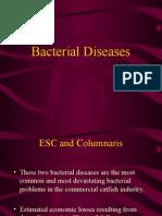Disease 4 Bacterial Diseases