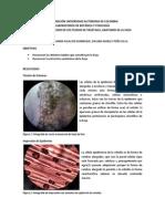 Informe 2 Botanica.pdf_copy