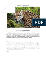 Material Fotografico do Pantanal