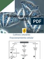 Te 8. Cultivo Celulas Ciencias 2014-II