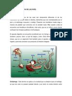 Fisiologia Digestiva de Las Aves