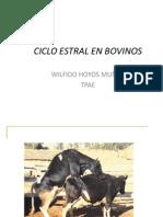 Ciclo estral en bovinos.pptx