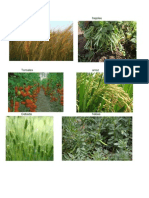 plantas foraneas