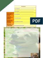 Carta_diade los animales 5°b