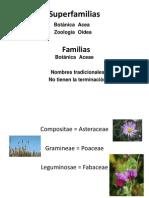 Diapositivas Familias