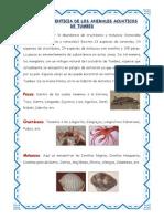 Cadena Alimenticia de Los Animales Acuaticos de Tumbes