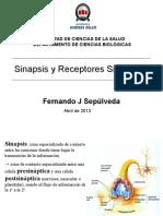 Clase 6 Bio036 - Sinapsis (1)