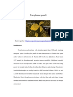 3.Toxoplasma gondii