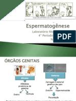 Espermatogese