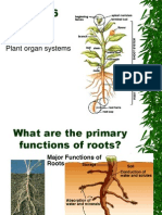 Botany-Ch06-roots.ppt