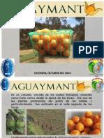 Aguaymanto (Physalis peruviana) Incahuasi - Lambayeque