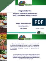 Berries - Sierra Exportadora