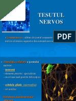 2012-tesut-nervos-130201053608-phpapp01