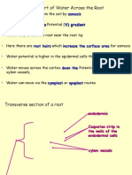 Transport of Water in Plants[1]