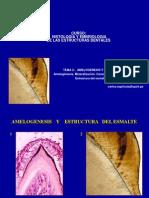 Teoria 5 Amelogenesis