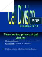 ap - cell division - mitosis