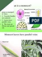 plants part2