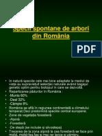 Arborii din România