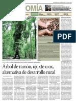 Árbol de Ramón, Ujuxte u Ox, Alternativa de Desarrollo Rural