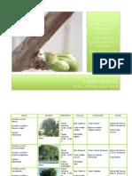 PALETA VEGETAL.pdf