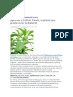 Como Cultivar Stevia Para La Diabetes