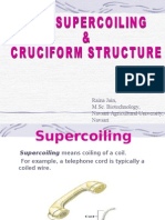 Dna Supercoiling