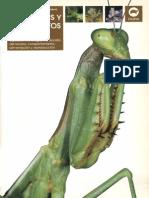 Las Mantis y Los Insectos Palo