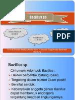 Identifikasi Bacillus sp
