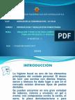 Diapositiva White Dent Original Para Exponer