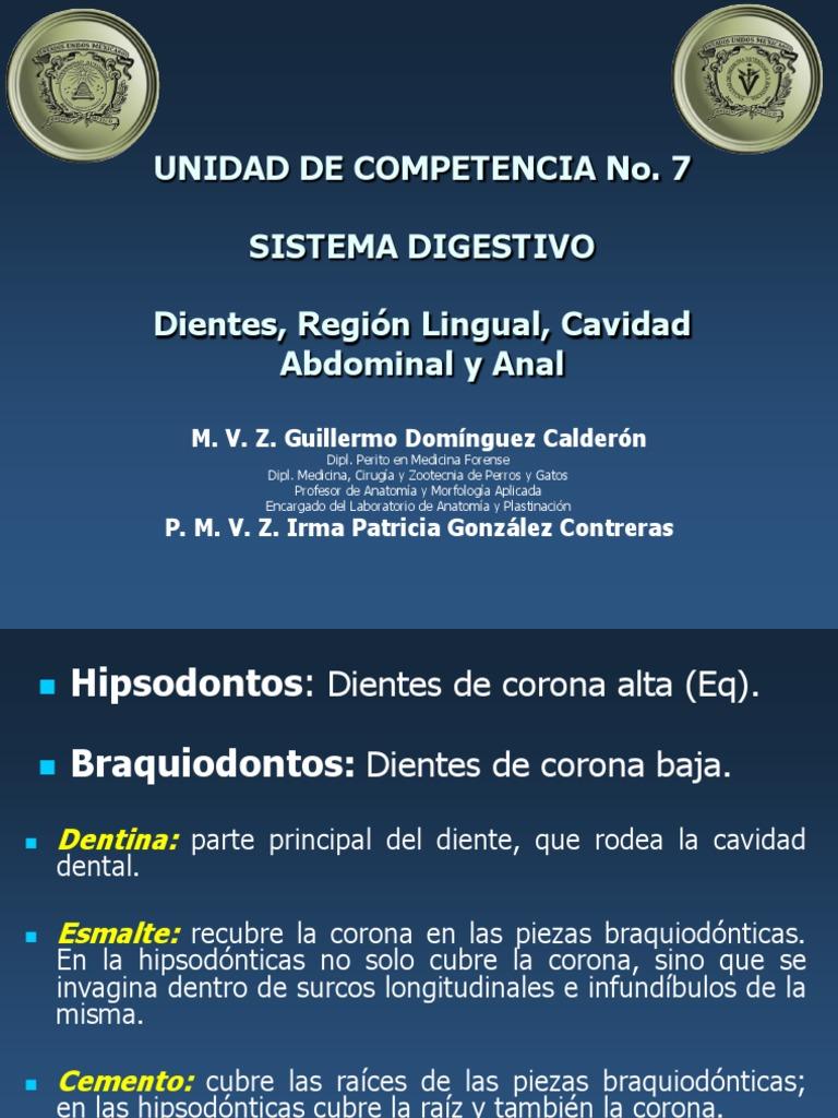 Sistema Digestivo. Dientes y Región Lingual