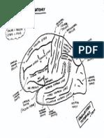 Brain Anatomy 1